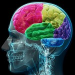 The key to happy employees and effective workplaces: The right brain in the right place.